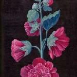 carte postale rose tremiere