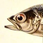 detail marque page poisson